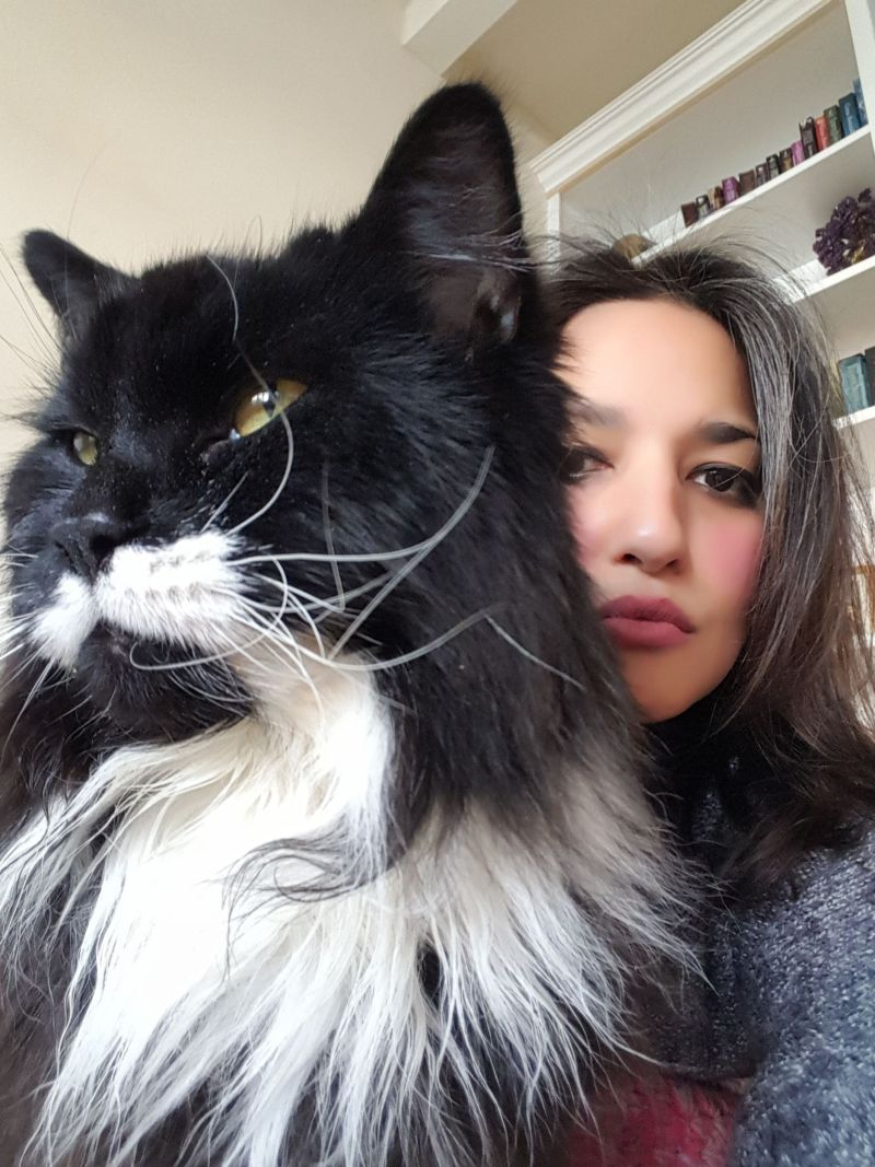 cat_4930